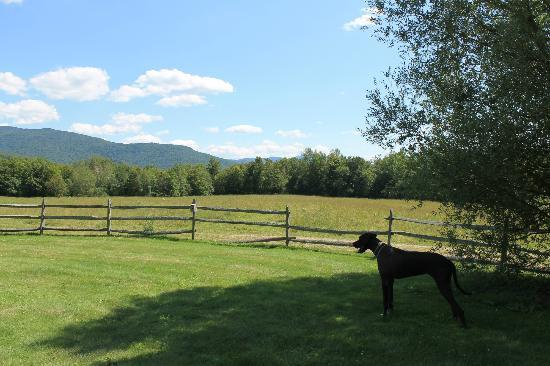 Windekind Farm: A real vacation for your pet