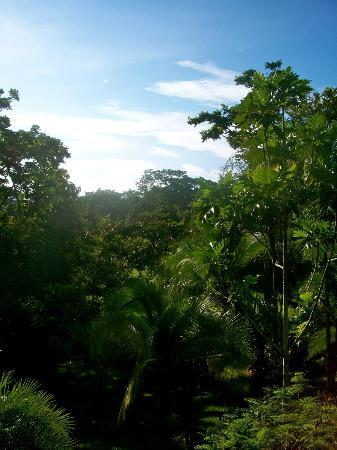 Osa Clandestina: nature at your door, view from the cabin