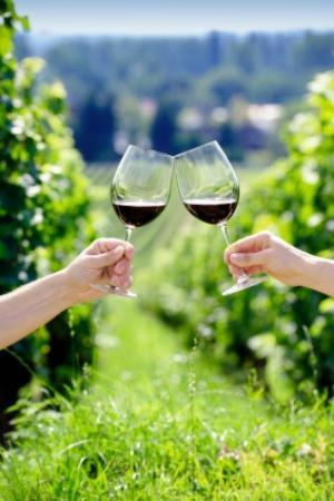 Cowansville, Kanada: Wine tasting in the vineyard!