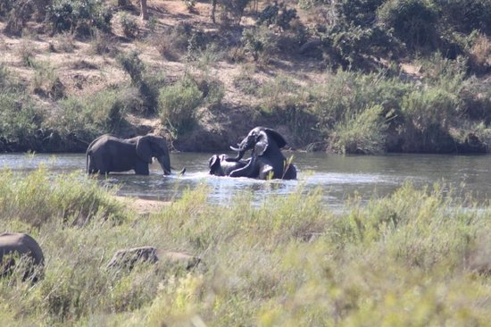 Shishangeni Lodge: Eliphants
