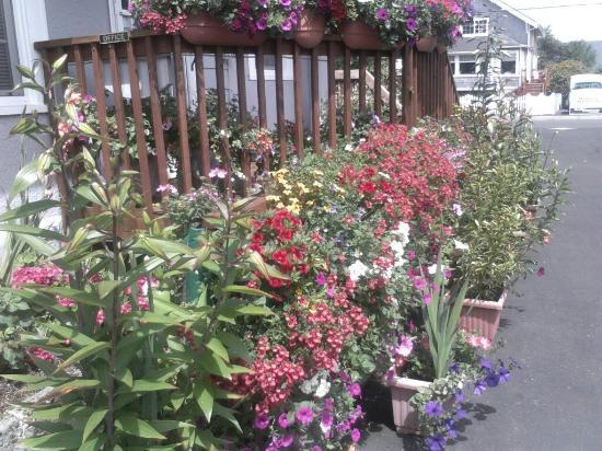 Paradise Suites & Rentals: Beautiful flowers surround the property!!!