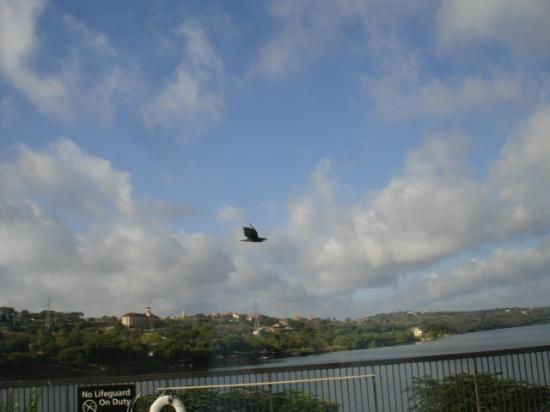 Hampton Inn Marble Falls-On The Lake: Waterfront Side