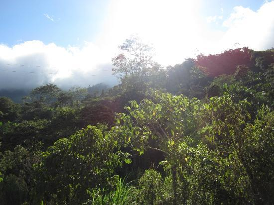 Hacienda Primavera Wilderness Ecolodge: views of cloud forest on another ride