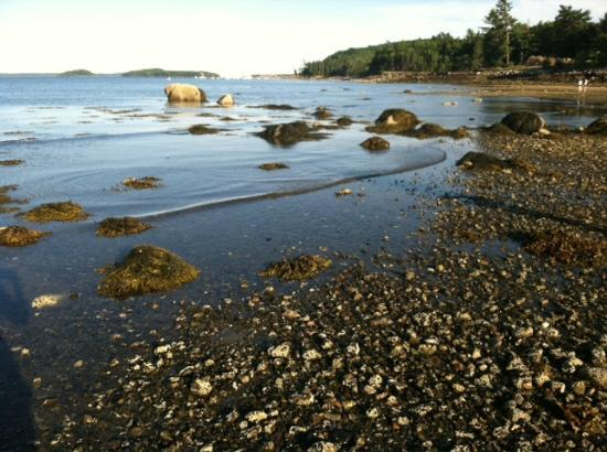 Hulls Cove, ME: Hull&#39;s Cove across the street