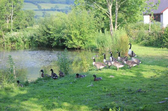 Pen-y Bryn Guest House: One of three ex mill ponds in their garden