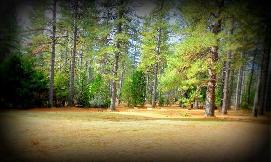 Ponderosa Ridge Resort & RV: Horse Shoes Anyone?
