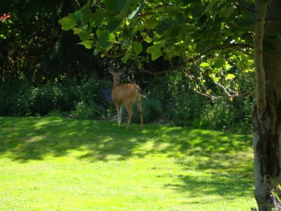 English Inn: Early morning visitor