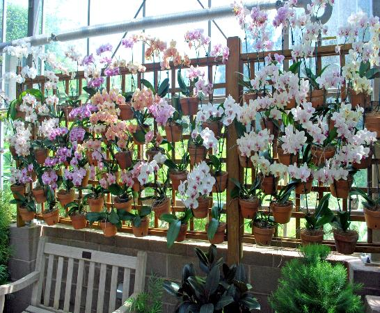 wall of orchids picture of atlanta botanical garden