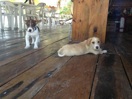 Xamach Dos: I love lounging in the restaurant area... so did these two.
