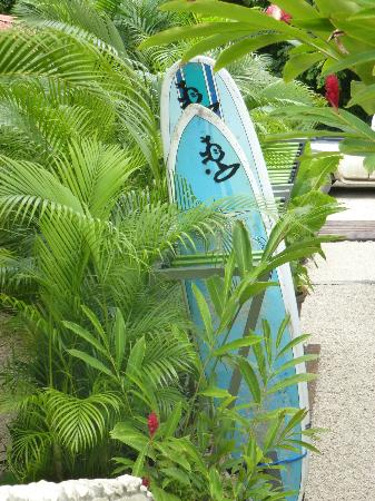 Surf Simply: All equipment is provided