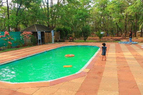 Swimming Pool Picture Of Mollem National Park Goa Tripadvisor