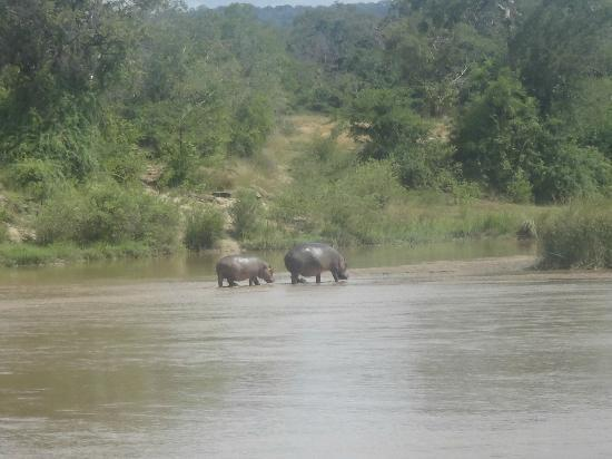 The Retreat Selous: Sicht von Suite am Hippo Point