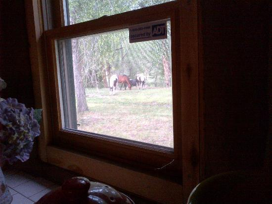 MW Bar Ranch: View from the kitchen window!