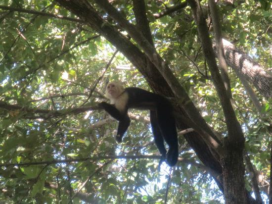 Allegro Papagayo: monkeys in the trees on the beach-you could feed them. They LOVE pancakes!!