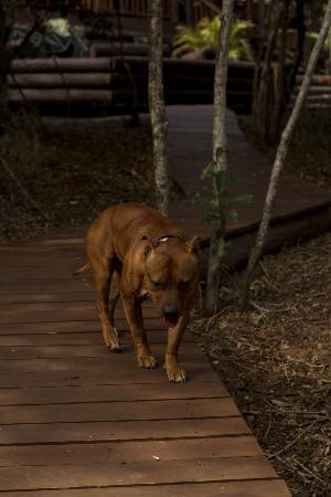Umkhumbi Lodge: Resident Lodge Dog.