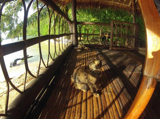 Sangat Island Dive Resort: Front porch and Athena the cat at Crusoe Cottage