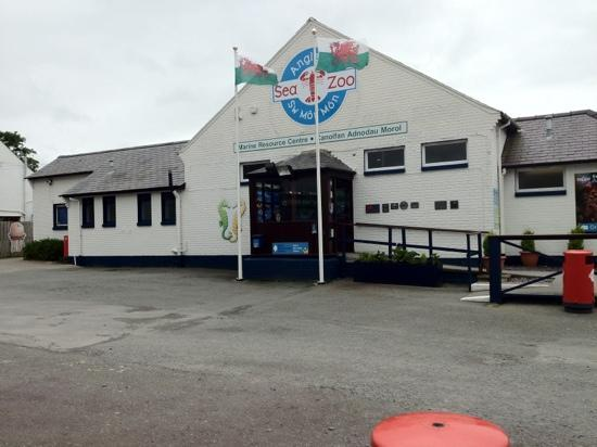 Octopus - Picture of Anglesey Sea Zoo, Brynsiencyn - TripAdvisor
