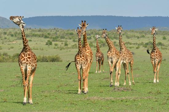 Sarova Mara Game Camp: Some locals