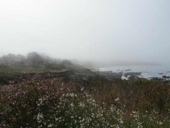 Fireside Inn on Moonstone Beach: View south coastline right across road from rooms.