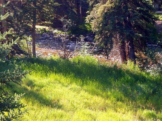 Alpine Creek Bed and Breakfast: Mountain stream in backyard