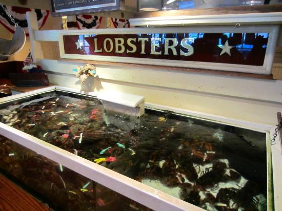 Lobster tank picture of union oyster house boston
