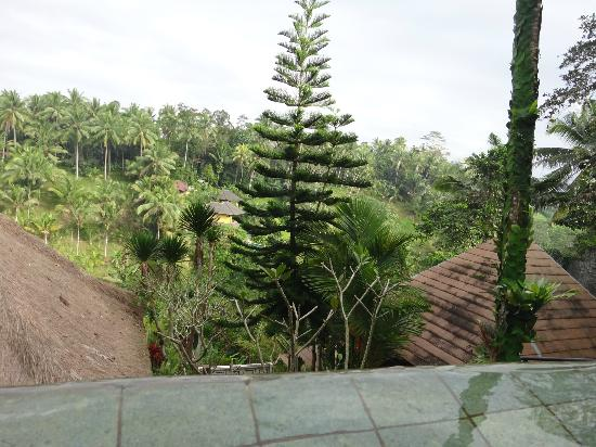Graha Moding Villas: View from room