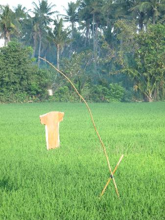 Mumbul Guesthouse: scarecrows
