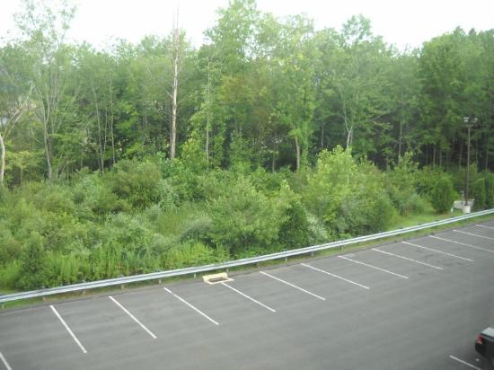 Comfort Suites: Wooded area behind hotel