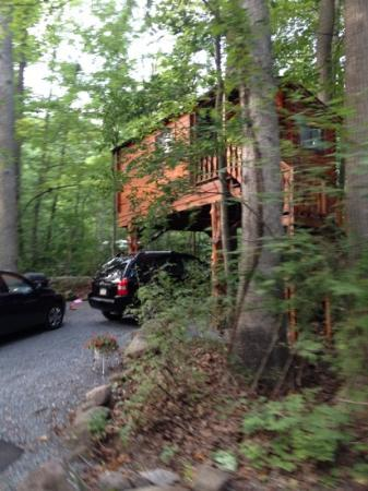 Narvon, Pensylwania: tree house rental