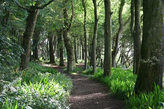 Courtmacsherry Woods quiet colour when we visited but bluebells in spring & flaming orange in au