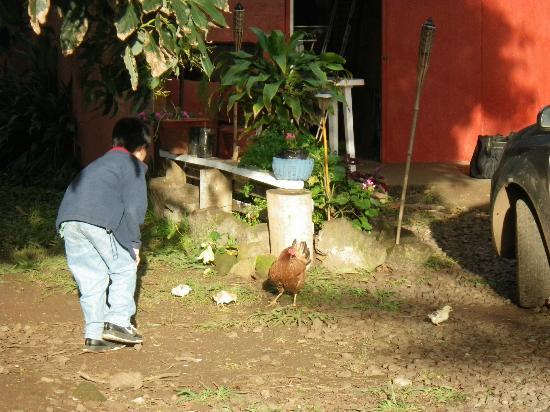 Tea Nui - Cabanas y Habitaciones: boys enjoying playing with chickens of Tea Nui