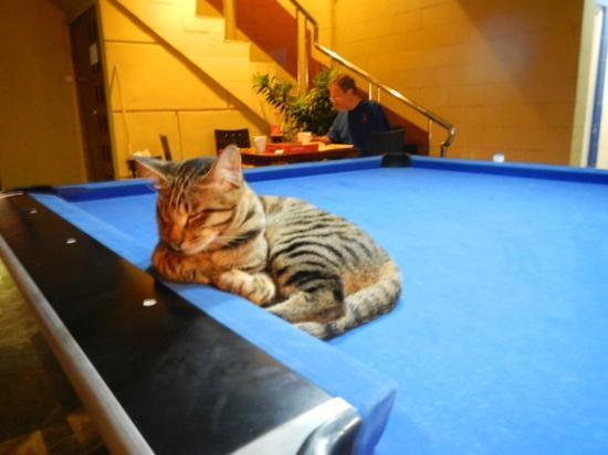 Six Degrees: Nemo has a much easier life than the many Jakarta street cats.