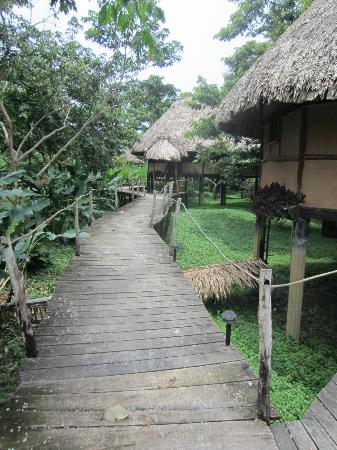 Cotton Tree Lodge: Walkway to rooms