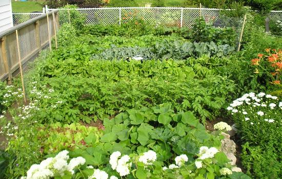 Between the Maples: Vegetable Garden