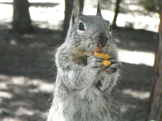 Hodgdon Meadow Campground: Snacking Squirrel at Hogdon Meadow Campground