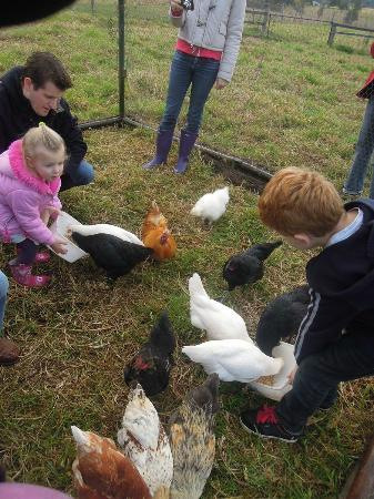 Cedar Glen Farmstay: Animal feeding session