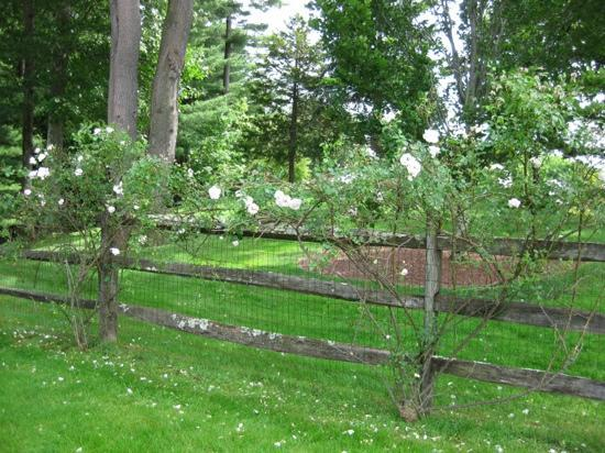 Mayflower Inn: fence