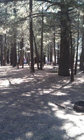Mammoth Lakes RV Park: Overview of tent site