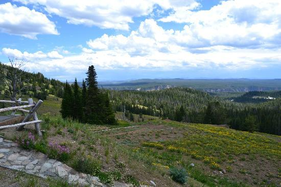 Yellowstone Association Private Tours