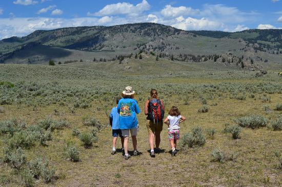 Dunraven Pass  Picture Of Yellowstone Association  Private Tours Yellowsto