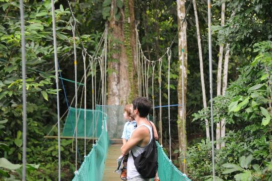 La Foresta Nature Resort: Titi Canopy