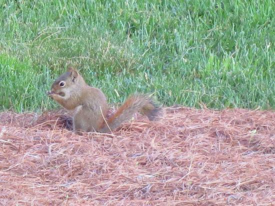 Jackson House Inn: Resident Squirrel
