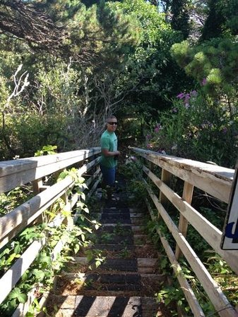 Castaway By the Sea: hiking trail stairway from castaway to the beach. wildflowers everywhere!