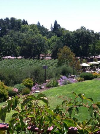 The Wine Country Inn: View of side yard &amp; pool umbrellas