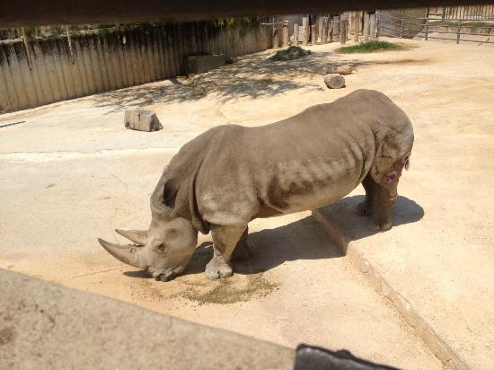 Lawn Mower Rhino Picture Of San Antonio Texas Tripadvisor