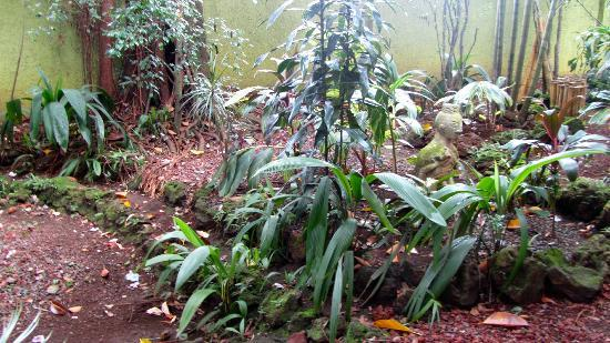 Orquideas Inn: Jardin