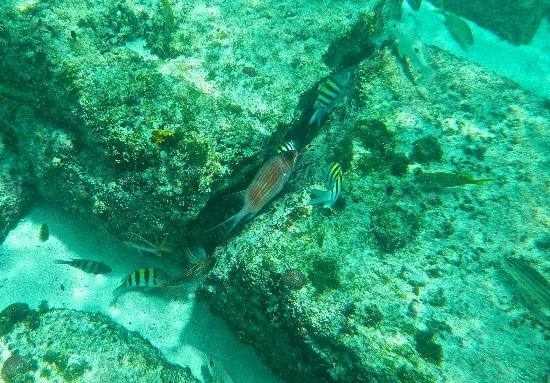 Bimini Sands Resort and Marina: Snorkeling right at the beach