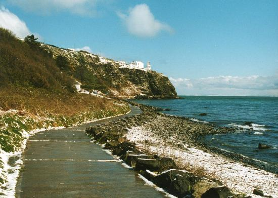 Whitehead attractions