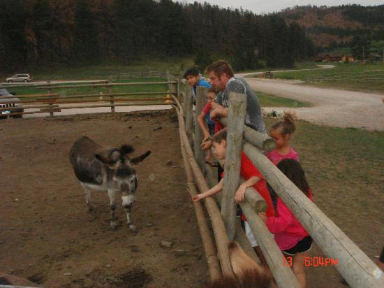 High Country Guest Ranch: Feeding the donkey :)