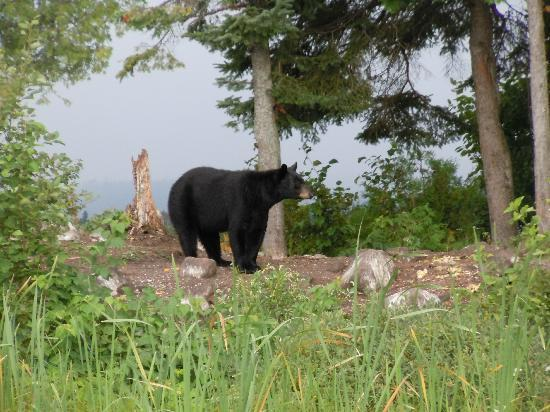 Wabatongushi Lake, Canada: A bear seen during our morning wilderness tour.